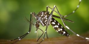 Dengue IgG/IgM